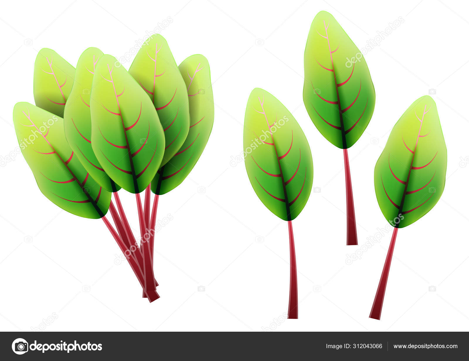 Rainbow Swiss Chard Vector Images Royalty Free Rainbow Swiss Chard Vectors Depositphotos