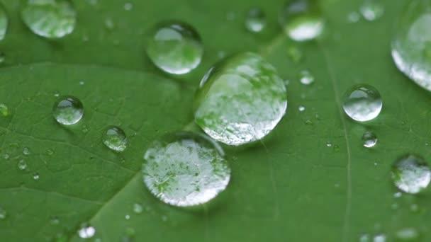kapky vody na list