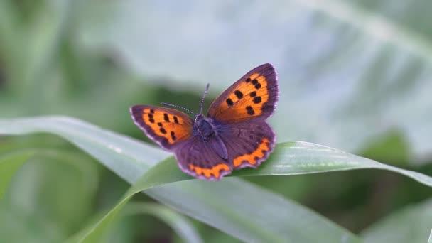egy pillangó közelről lövés