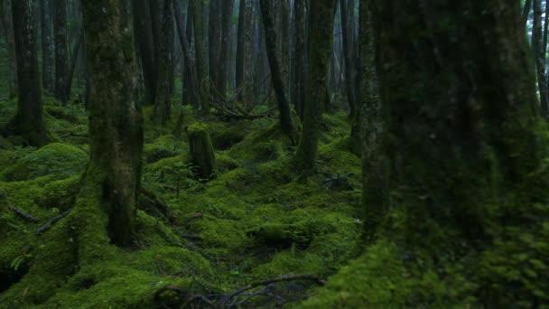 Zöld moha borított régi fák az erdőben
