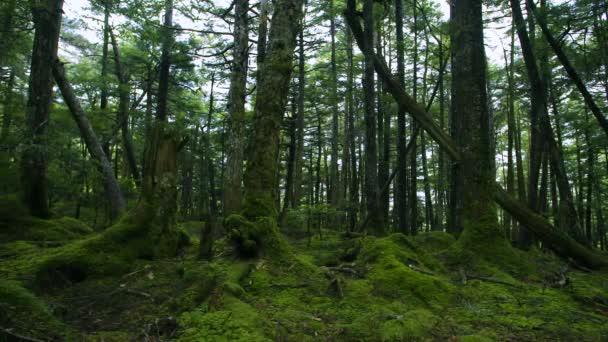 Zelený mech pokryté staré stromy v lese