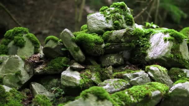 Moos wächst auf Felsen