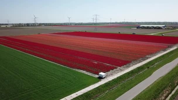 Výstřel z bezpilotního letounu přeletěl nad poli Tulipánů ve Flevopolderu v Nizozemsku poblíž místa Dronten