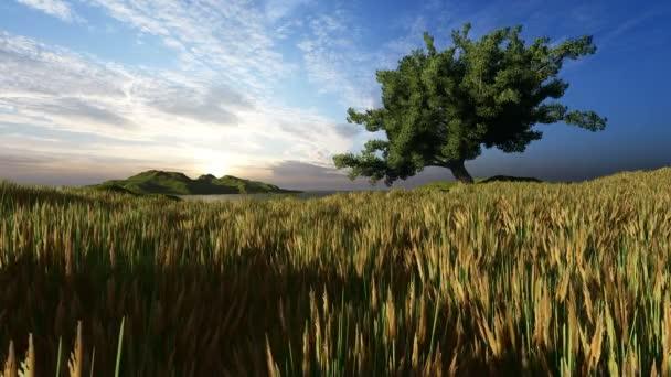Fa és fű hajnalban