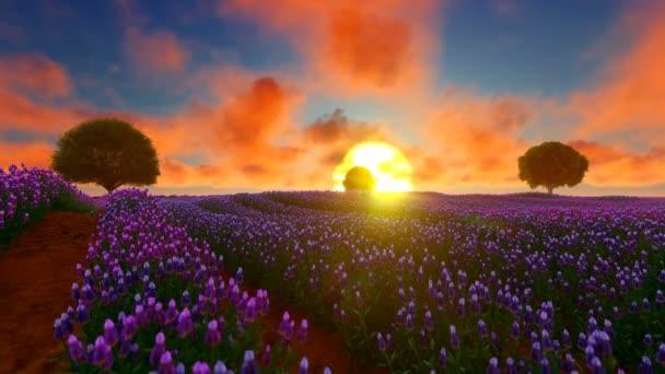 Gyönyörű levendula mező és fák naplementekor
