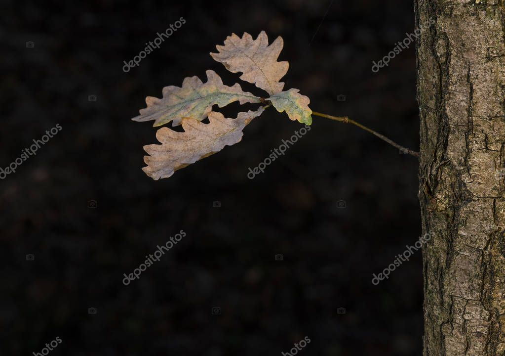 Detail of leaves on an autumn tree