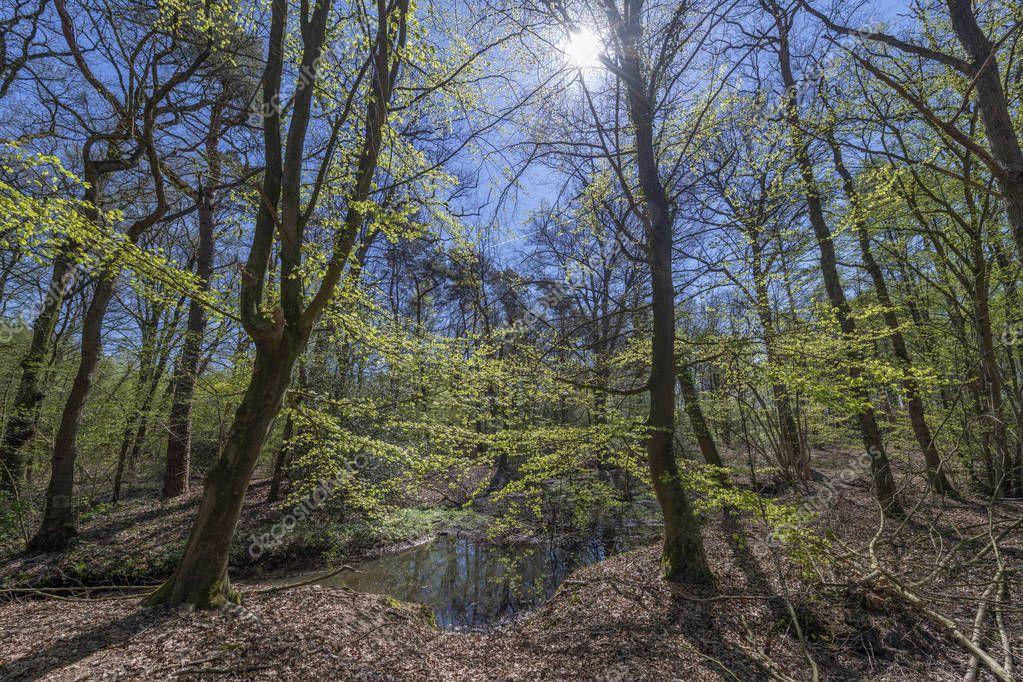 Dottinkrade forest near Winterswijk