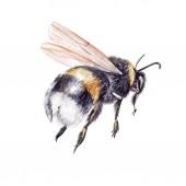 Fotografia Bellissimo acquerello set con ape dellinsetto