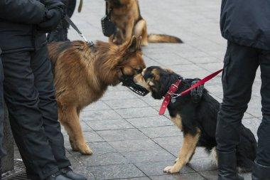 İki Servis Köpeği Buluşması