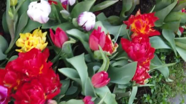 wunderschöne blühende Blumen, die sich im Wind wiegen. Nahaufnahme. Zeitlupe. ruhiger cineastischer Hintergrund.