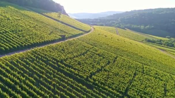 Letecký pohled na vinice v údolí Remstal v Německu v létě