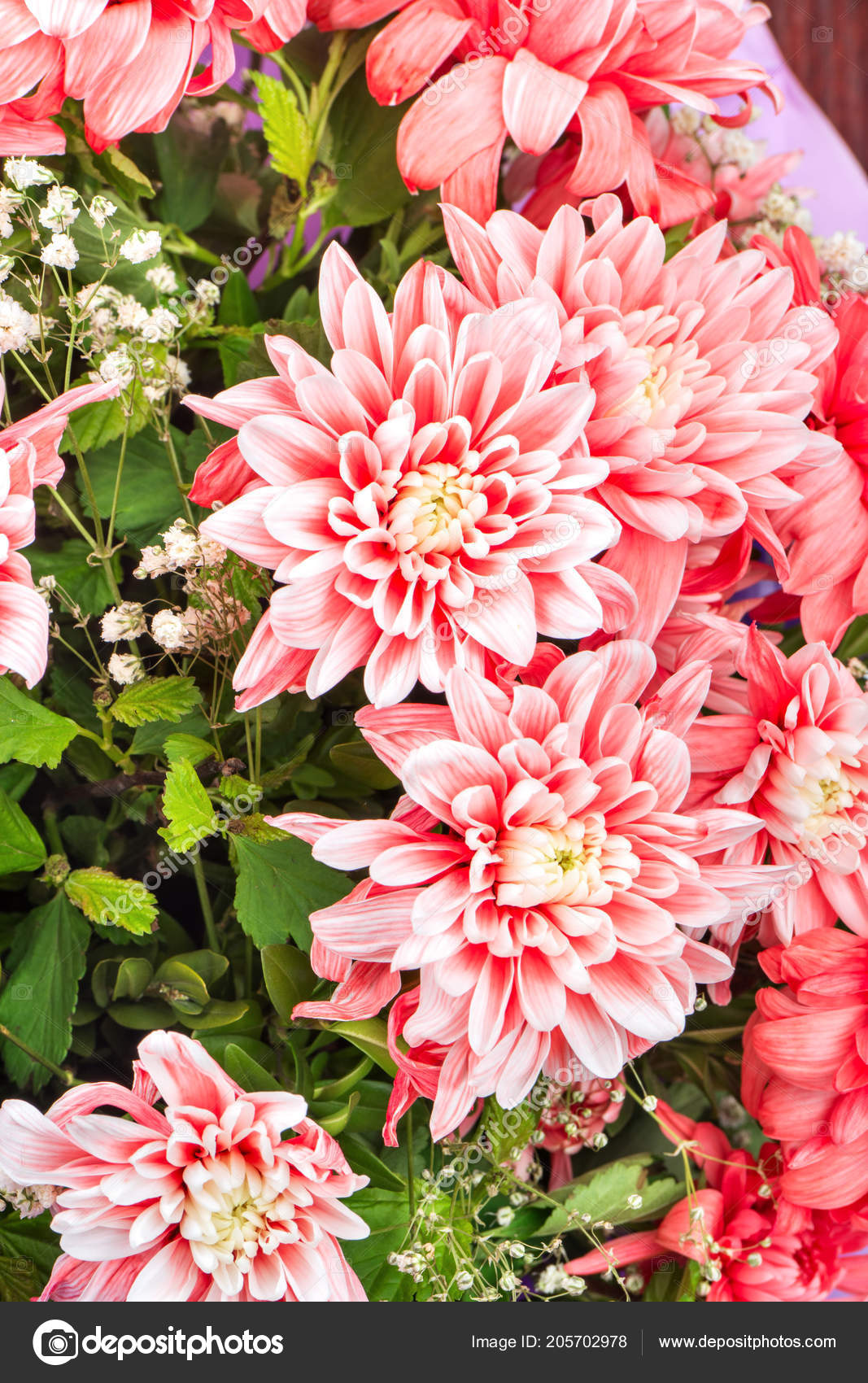 Beautiful bouquet flowers chrysanthemums close stock photo beautiful bouquet flowers chrysanthemums close stock photo izmirmasajfo