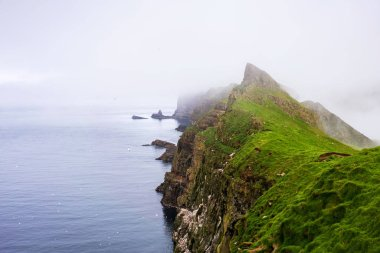 Cliffs with nesting birds above Atlantic Ocean and green mountains covered with thick fog. Mykines, Faroe Islands.