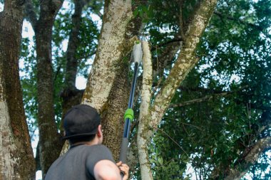 tree worker has cut a large tree limb off with a pole saw
