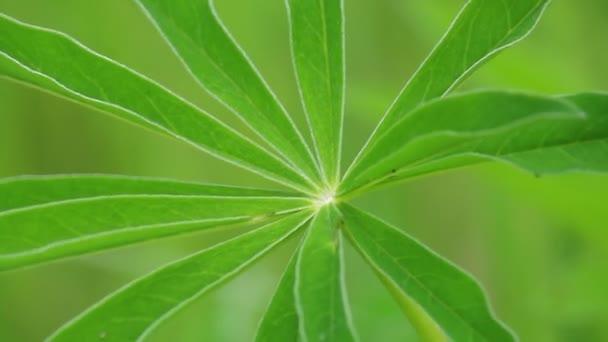 Svěží květinová zelený list se houpat ve větru. Detail