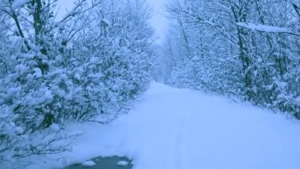 Schöner Schneefall in einem Winterwald. Schnee bedeckte alle Bäume. In Raw mit der Kamera aufgenommen.