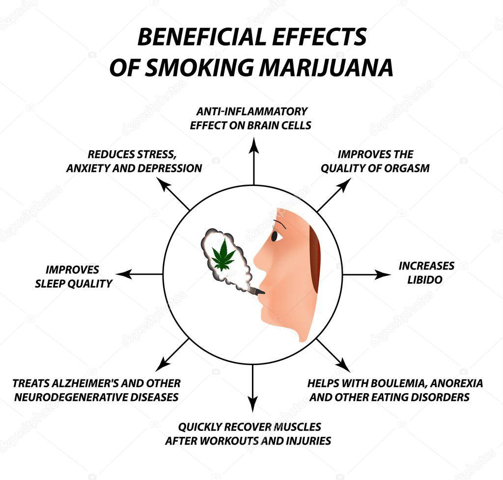 Useful properties of smoking cannabis. Cannabis treatment. Cannabinoid, hemp. Marijuana leaf and human brain. Infographics. Vector illustration on isolated background