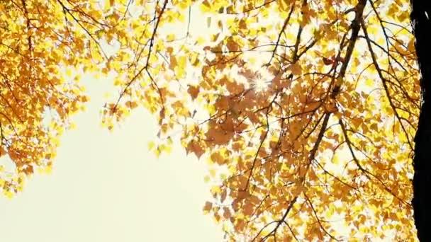 Keresztül süt a nap esik, levelek, fúj a szél. Lassú mozgás.