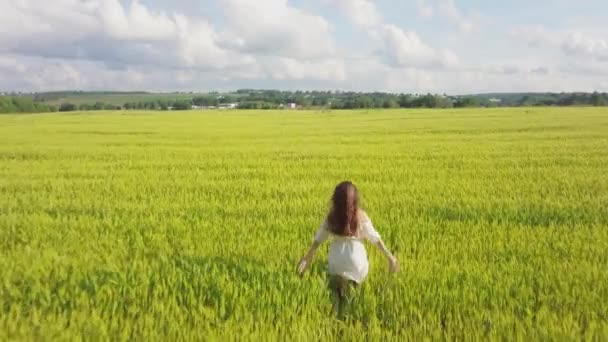 Young modern girl in a white dress with brown hair walks on a green yellow wheat field in cloudy summer day weather. Touching with hand wheat ears. Blue sky and forest on background. 4K aerial drone