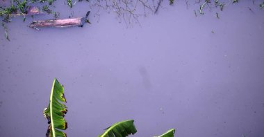 Submerged plant and trees during flood.