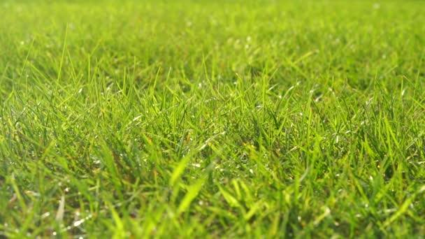 zelená tráva pozadí (bezešvé smyčka)