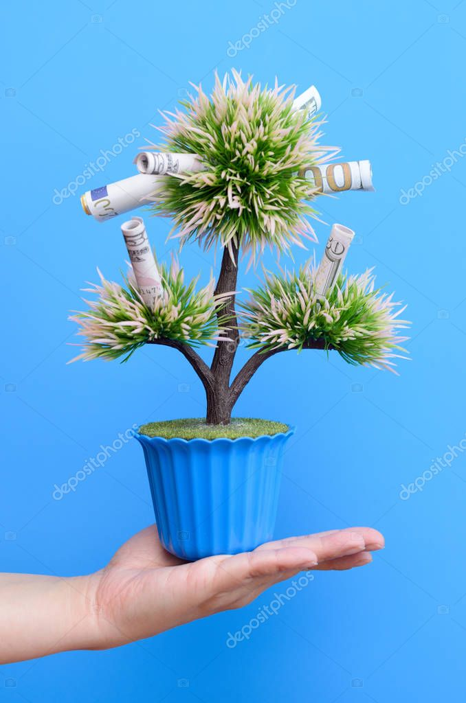 Money bills on the branches of a money tree on a blue background.