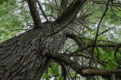 Fotografie stromu kmen siluety v lese s zelené listí textur v pozadí. slunečný den