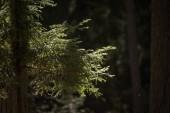 stromu kmen texturou pozadí vzorek. prosluněné letní scéna v lese s zeleň listí