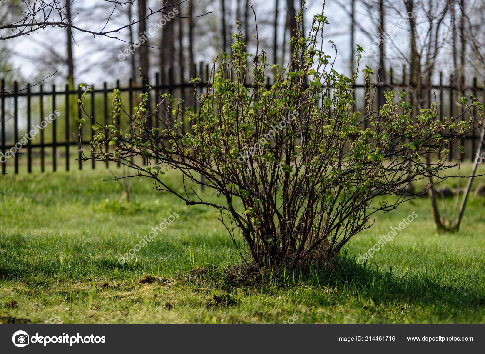 Alte Holzerne Zaun Garten Landschaft Sommer Mit Grunen Wiese Und