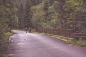 Fotografie asfaltové silnici vedoucí do hor v lese