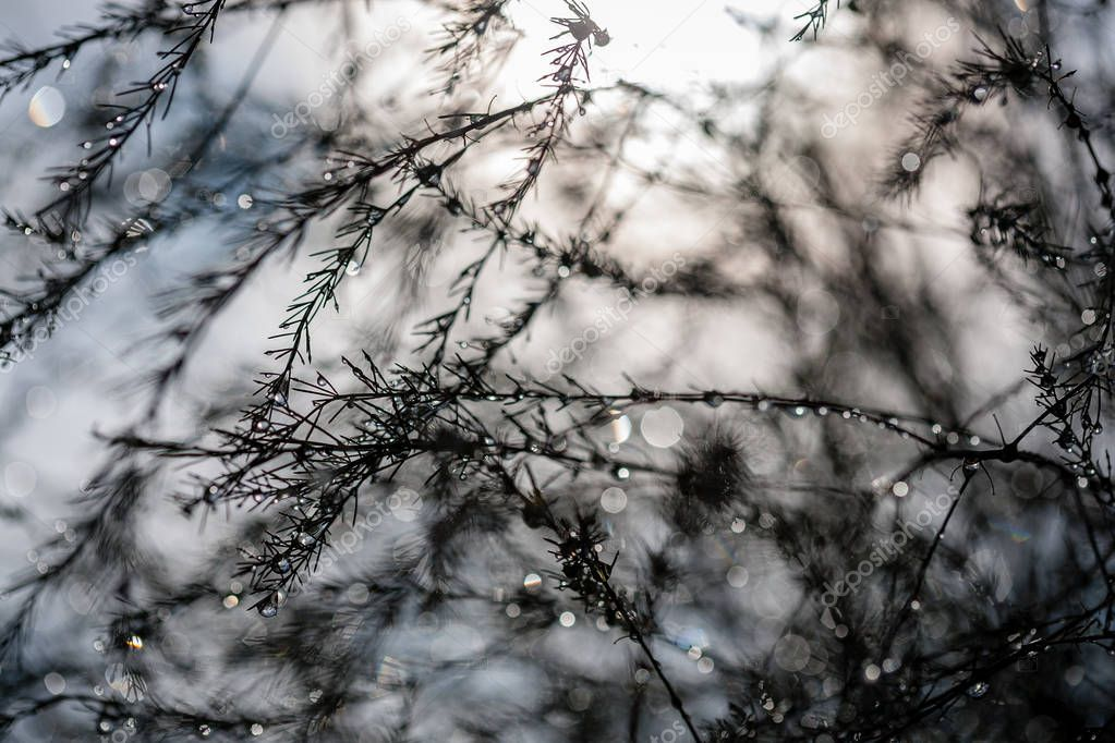 abstract reflections from raindrops in wet branches of bushes. blur background texture with sun reflections and green cast
