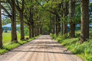 empty road with large trees on both sides, Latvia