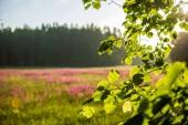 listoví textura listí v zeleném slunném letním čase