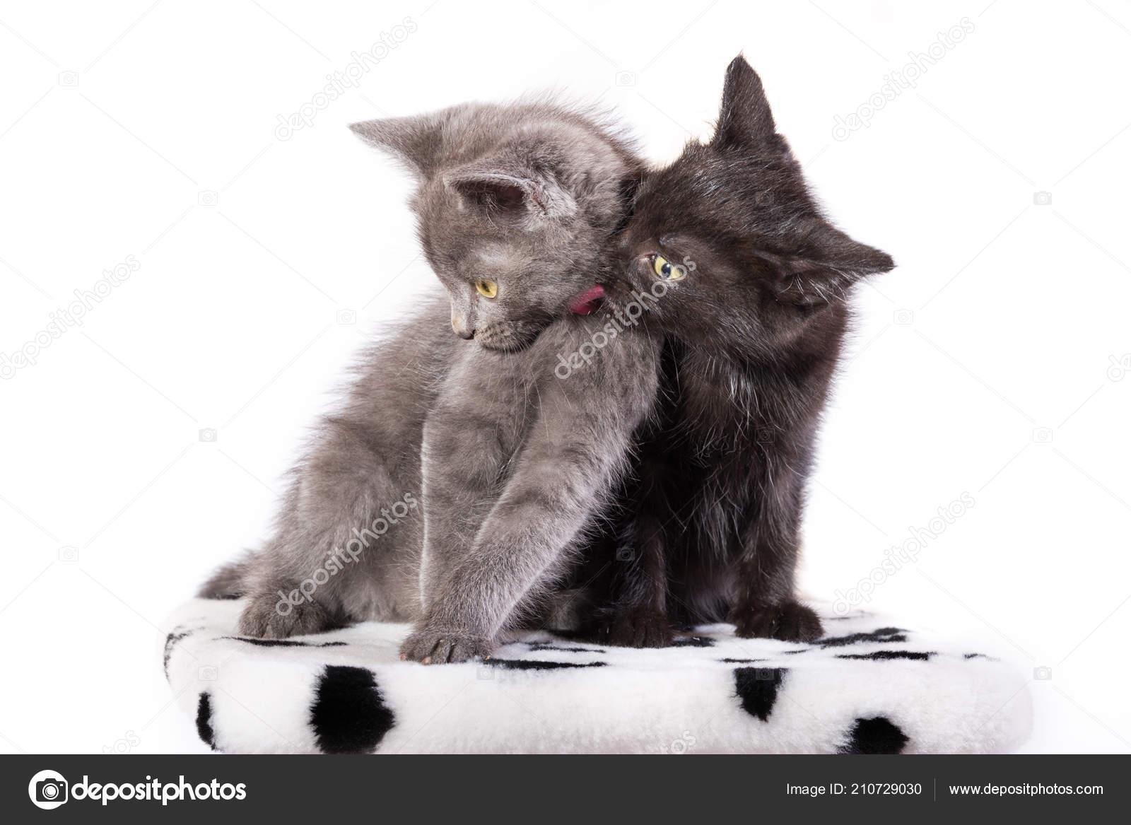 Lízání černou kočičku