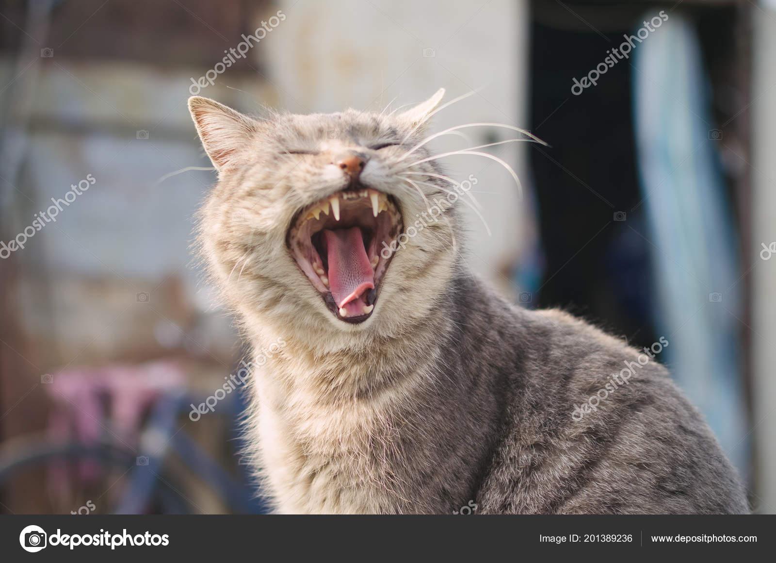 otevřená kočička zdarma