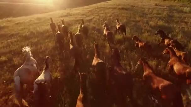 horses are galloping aerial view of moving horses we are the wild