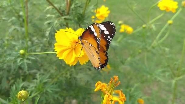 gyönyörű pillangó egy virágon