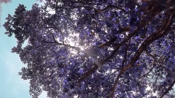tree with white and purple flowers