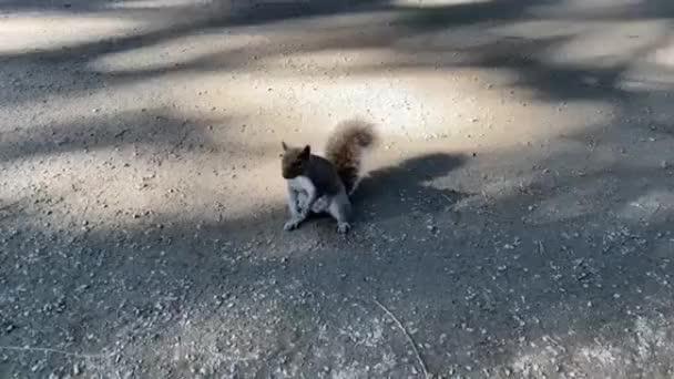 veverka na ulici
