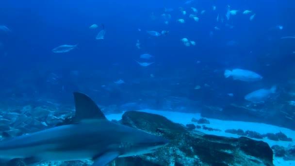 zvířata pod vodou