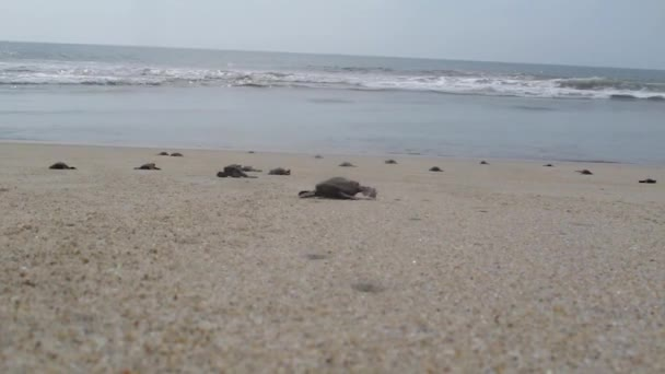 želvy na břehu