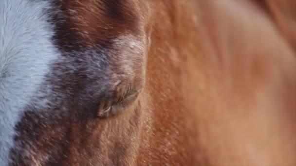 close up video koně