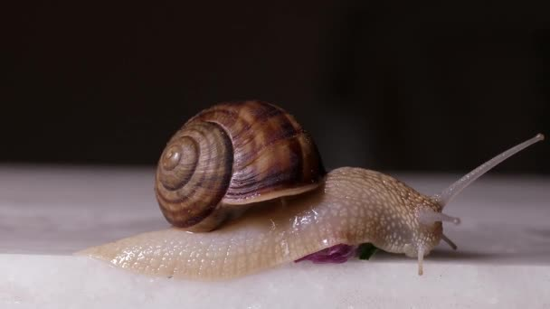 close up video of a snail