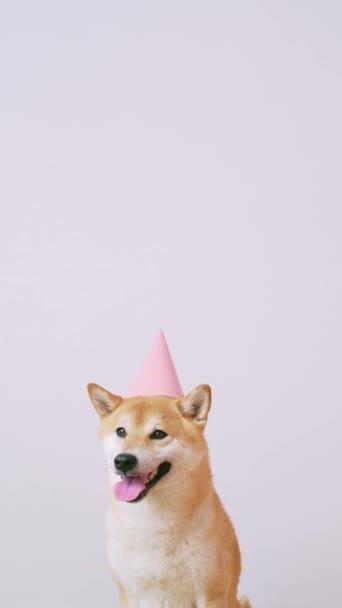Niedlicher Hund mit Party-Hut