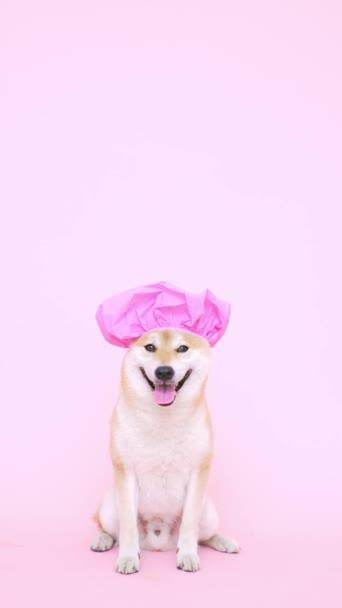 roztomilý pes se sprchovým koutem