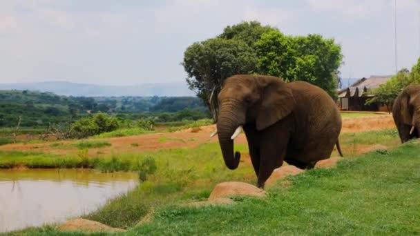 Elefanten und ihr Lebensraum