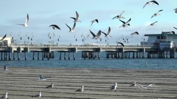 zpomalené záběry ptáků letících společně