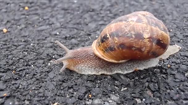 video of snail moving