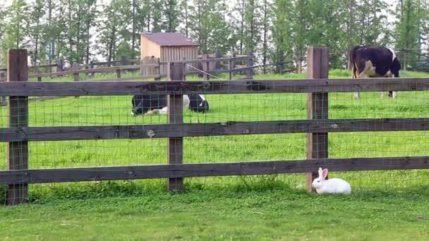 bílý králík u plotu