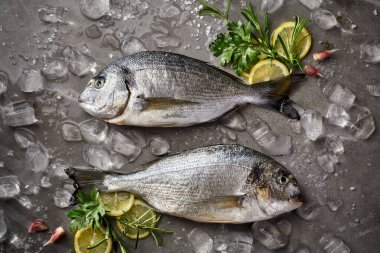 Fresh and raw fish, Dorada fish, sea bream, gilt-head (sea) bream  with ice, lemon and herbs on a grey stone background, top view. Seafood, fish